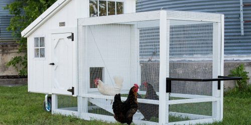 Chicken tractors for sale in central texas