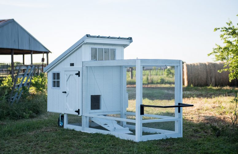Barn white chicken tractor for sale (15)