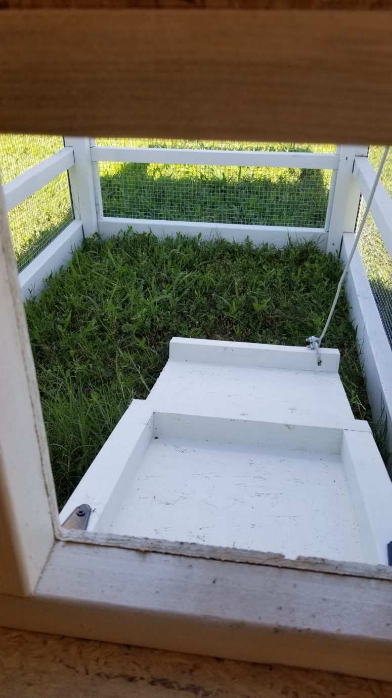 Chicken tractor for sale (3)