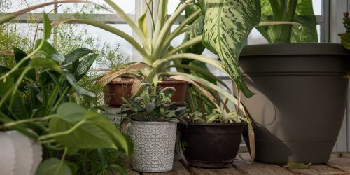 Plants growing in portable greenhouse by lone star structures