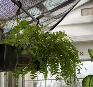 Plants in greenhouse shed